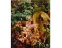 海螺沟植物2号